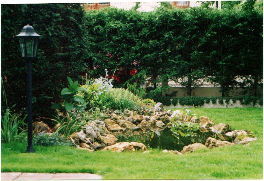 bassin de jardin ombre ou soleil bassin de jardin